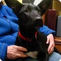 Adopt A Pet :: Oscar - Henderson, KY