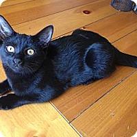 Adopt A Pet :: Lola - Chandler, AZ