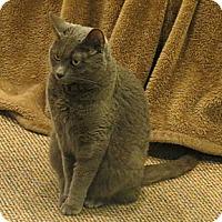 Adopt A Pet :: Minnie - Raritan, NJ