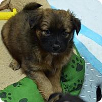 Adopt A Pet :: Savannah - Burleson, TX