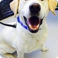 Adopt A Pet :: Nicko - Torrance, CA