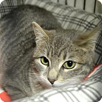 Adopt A Pet :: Venice - Queens, NY