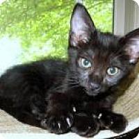 Adopt A Pet :: Aladdin Sane - Duluth, GA