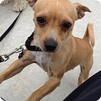 Adopt A Pet :: Mojo - Oakley, CA