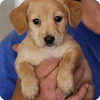 Adopt A Pet :: Jane Austin~adopted! - Glastonbury, CT