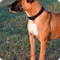 Adopt A Pet :: Mistie - Westport, CT