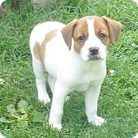 Adopt A Pet :: Zana - West Chicago, IL