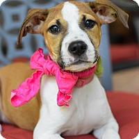 Adopt A Pet :: Bryna - Baton Rouge, LA