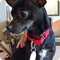 Adopt A Pet :: Jax - St Louis, MO