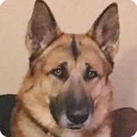 Adopt A Pet :: Myles (Medical Hold) - Kansas City, MO