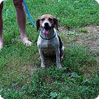 Adopt A Pet :: Fiesta - Dumfries, VA
