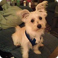 Adopt A Pet :: Seamus - Omaha, NE