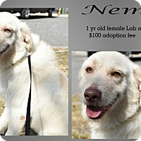 Adopt A Pet :: Nemo - Jefferson City, TN