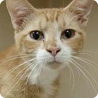 Adopt A Pet :: Velcro $20 - Lincolnton, NC