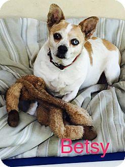 English Bulldog/Terrier (Unknown Type, Medium) Mix Dog for adoption in Santa Clarita, California - Betsy