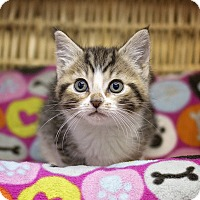 Adopt A Pet :: Charlotte - Sterling, KS