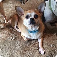 Adopt A Pet :: Chugs - Acworth, GA