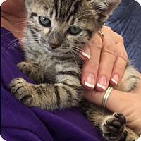 Adopt A Pet :: TATER & CHIP - Fort Lauderdale, FL