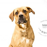 Adopt A Pet :: Trina - Kansas City, MO