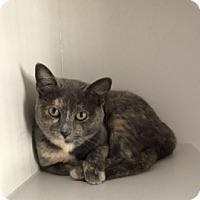 Adopt A Pet :: Coba - Gadsden, AL