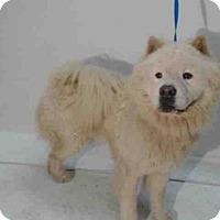 Adopt A Pet :: BRONX - Orlando, FL