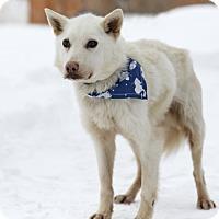 Adopt A Pet :: Miyo - Ile-Perrot, QC