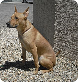 Carolina Dog Mix Dog for adoption in Wickenburg, Arizona - Breezy