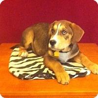 Adopt A Pet :: Barker - San Antonio, TX