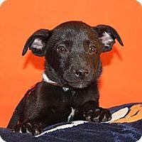 Adopt A Pet :: Julius - Broomfield, CO
