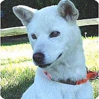 Adopt A Pet :: Kongju - Southern California, CA