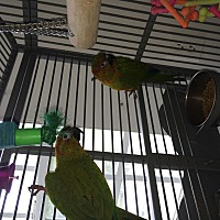 Adopt A Pet :: Cookie & CeeCee - Punta Gorda, FL