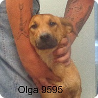 Adopt A Pet :: Olga - baltimore, MD