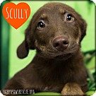 Adopt A Pet :: Scully