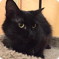 Adopt A Pet :: Mona Lisa - Monroe, GA