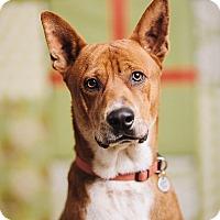 Adopt A Pet :: Kenzo - Portland, OR