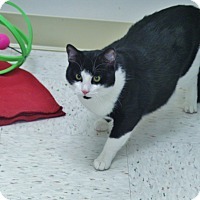 Adopt A Pet :: Cookie - Chambersburg, PA