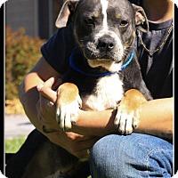Adopt A Pet :: Phoenix - Elizabethton, TN