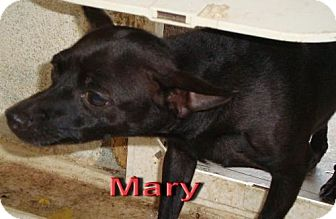 Chihuahua Mix Dog for adoption in Coleman, Texas - Mary