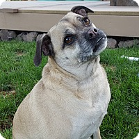 Adopt A Pet :: Tawny-Looking for Love! - Bend, OR