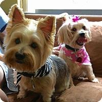 Adopt A Pet :: Gigi and Chui - Plant City, FL