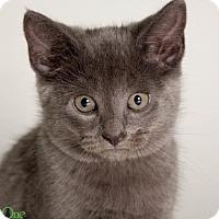 Adopt A Pet :: Michael - Savannah, GA