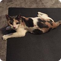 Adopt A Pet :: Savannah - Lockport, NY