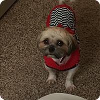 Adopt A Pet :: A - CAMILLE - Ann Arbor, MI