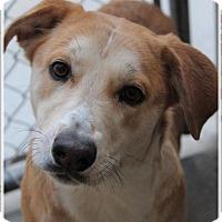 Adopt A Pet :: STAR - Red Bluff, CA