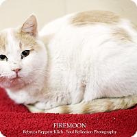 Adopt A Pet :: Firemoon *Petsmart GB* - Appleton, WI