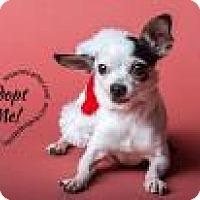 Adopt A Pet :: Pebbles - Midland, VA