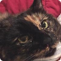 Adopt A Pet :: Blondie - Houston, TX