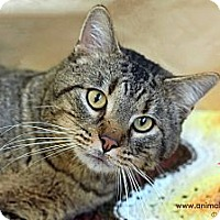 Adopt A Pet :: Dave - St Louis, MO