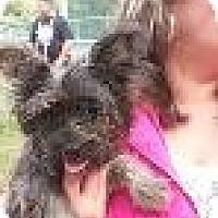 Adopt A Pet :: Baby Scooter - Marlton, NJ