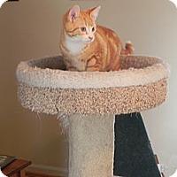 Adopt A Pet :: Peter - Fayetteville, TN